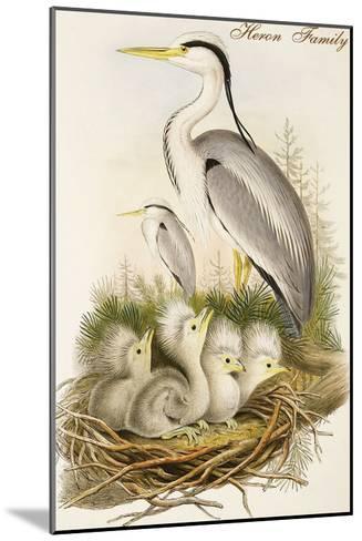 Heron Family-John Gould-Mounted Art Print