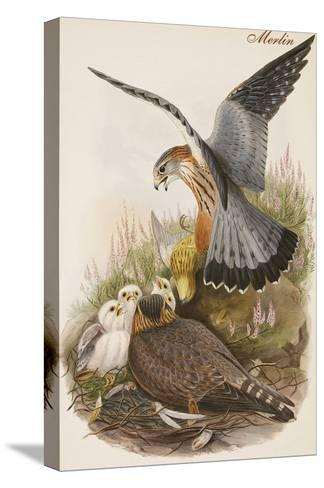 Merlin-John Gould-Stretched Canvas Print