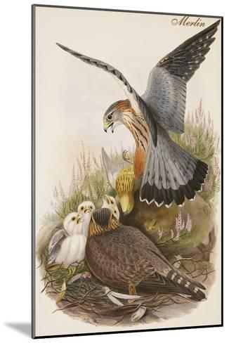Merlin-John Gould-Mounted Art Print