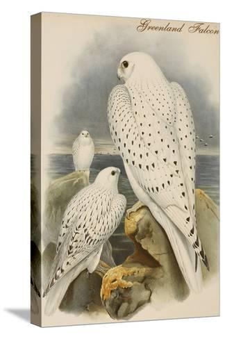 Greenland Falcon-John Gould-Stretched Canvas Print