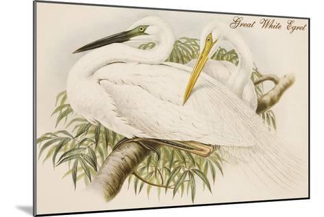 Great White Egret-John Gould-Mounted Art Print