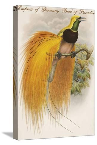 Empress of Germany Bird of Paradise.-John Gould-Stretched Canvas Print