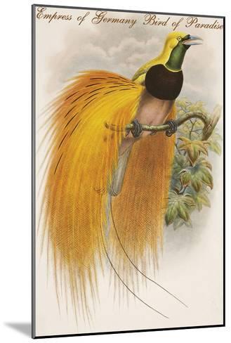 Empress of Germany Bird of Paradise.-John Gould-Mounted Art Print