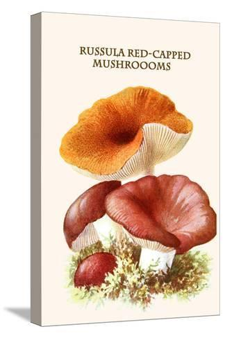 Russula Red-Capped Mushroooms-Edmund Michael-Stretched Canvas Print