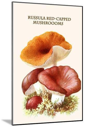 Russula Red-Capped Mushroooms-Edmund Michael-Mounted Art Print
