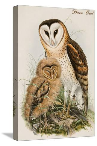 Barn Owl-John Gould-Stretched Canvas Print