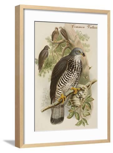 Common Vulture-John Gould-Framed Art Print