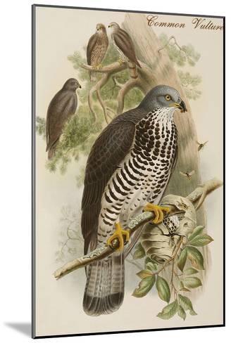 Common Vulture-John Gould-Mounted Art Print