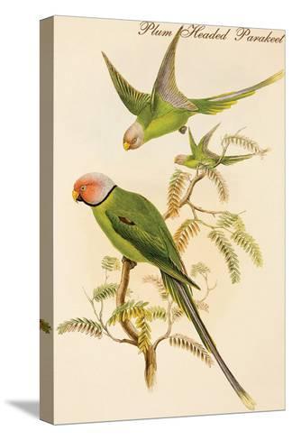 Plum Headed Parakeet-John Gould-Stretched Canvas Print