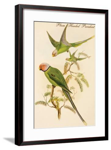 Plum Headed Parakeet-John Gould-Framed Art Print