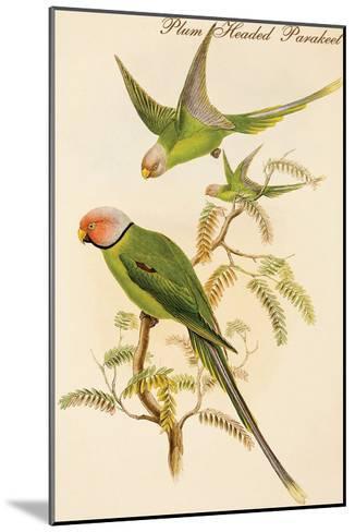 Plum Headed Parakeet-John Gould-Mounted Art Print