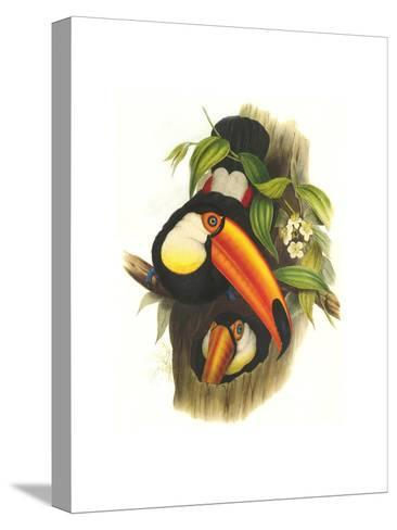 Toco Toucan-John Gould-Stretched Canvas Print