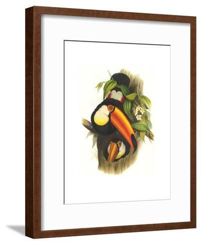 Toco Toucan-John Gould-Framed Art Print