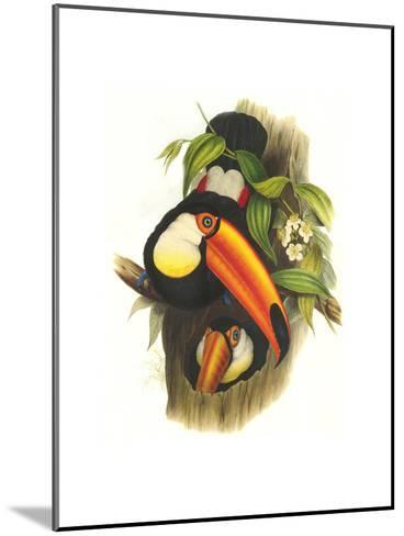 Toco Toucan-John Gould-Mounted Art Print