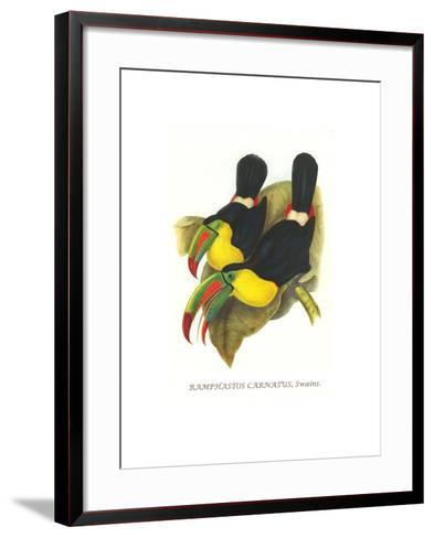 Rainbow or Keel Billed Toucan-John Gould-Framed Art Print