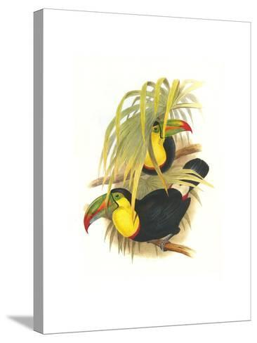 Rainbow or Keel Billed Toucan-John Gould-Stretched Canvas Print
