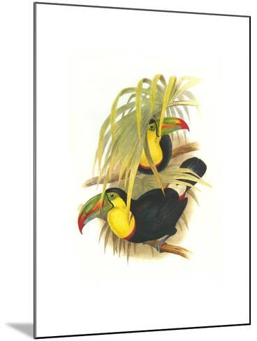 Rainbow or Keel Billed Toucan-John Gould-Mounted Art Print