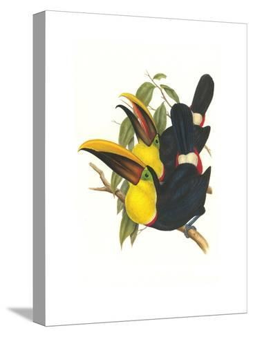 Choco Toucan-John Gould-Stretched Canvas Print