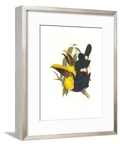 Choco Toucan-John Gould-Framed Art Print