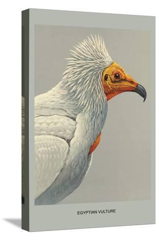 Egyptian Vulture-Louis Agassiz Fuertes-Stretched Canvas Print