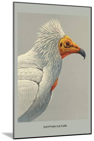 Egyptian Vulture-Louis Agassiz Fuertes-Mounted Art Print