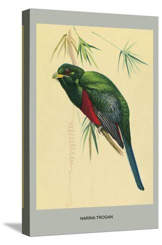 Narina Trogon-Louis Agassiz Fuertes-Stretched Canvas Print