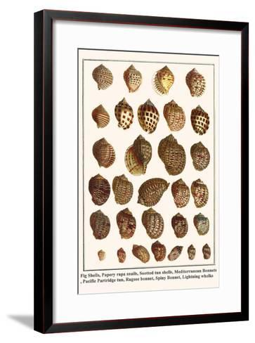 Fig Shells, Papery Rapa Snails, Sootted Tun Shells, Mediterranean Bonnets, etc.-Albertus Seba-Framed Art Print