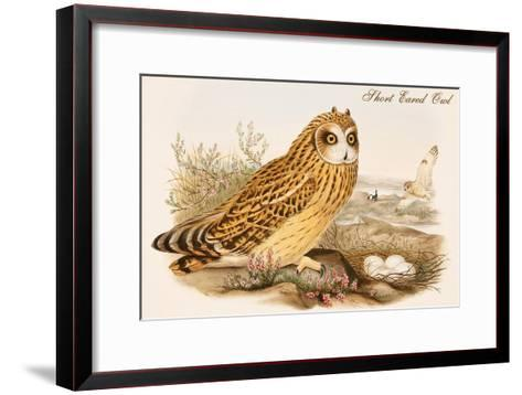 Short Eared Owl-John Gould-Framed Art Print