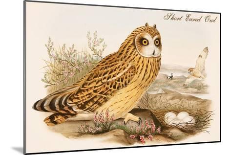 Short Eared Owl-John Gould-Mounted Art Print