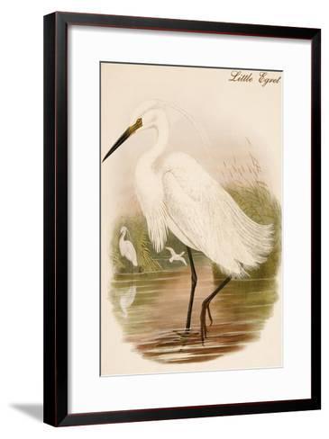Little Egret-John Gould-Framed Art Print