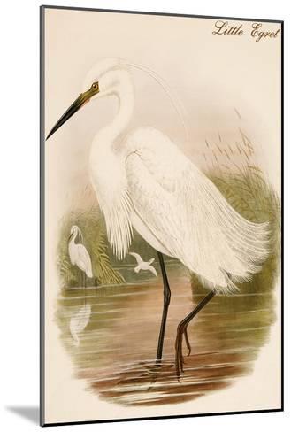 Little Egret-John Gould-Mounted Art Print