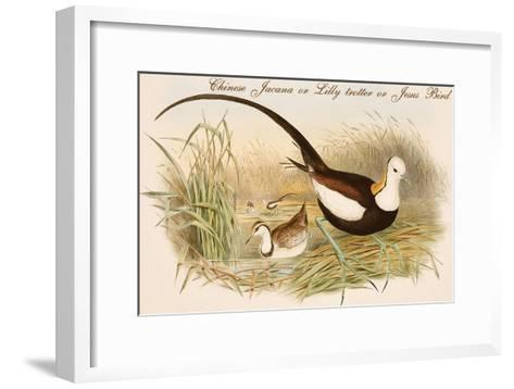Chinese Jacana or Lilly Trotter or Jesus Bird-John Gould-Framed Art Print