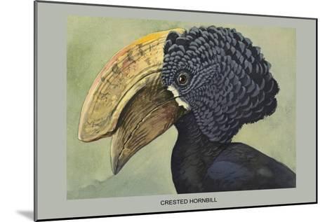 Crested Hornbill-Louis Agassiz Fuertes-Mounted Art Print
