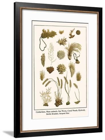 Cnidarians, Moss Animals, Sea Worm, Coral Weeds, Hydroid, Bottle Brushes, Serpent Star-Albertus Seba-Framed Art Print