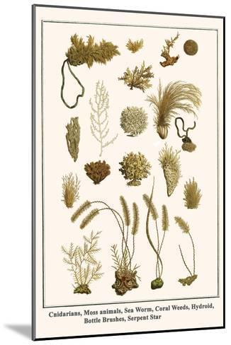Cnidarians, Moss Animals, Sea Worm, Coral Weeds, Hydroid, Bottle Brushes, Serpent Star-Albertus Seba-Mounted Art Print