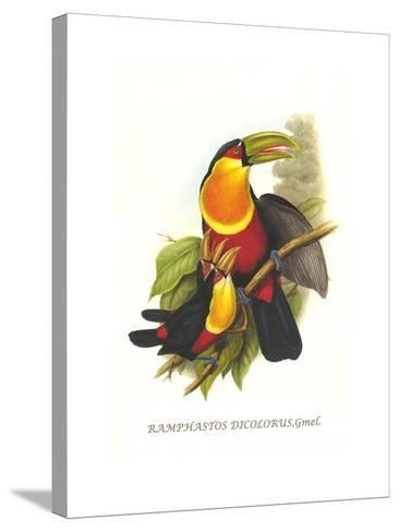 Red Breaster Toucan and Green Billed-John Gould-Stretched Canvas Print