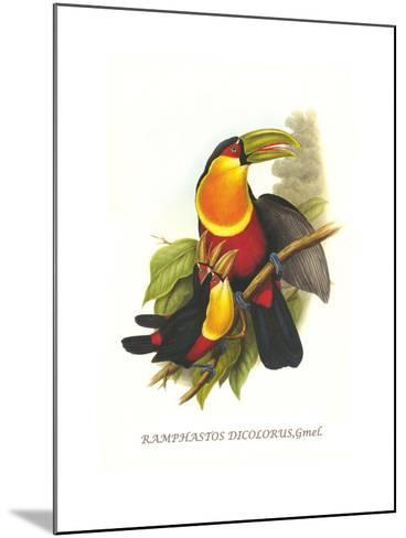 Red Breaster Toucan and Green Billed-John Gould-Mounted Art Print