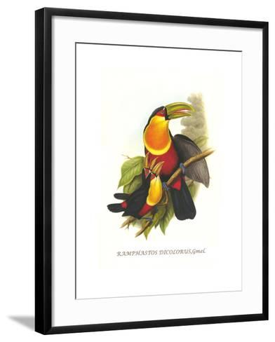 Red Breaster Toucan and Green Billed-John Gould-Framed Art Print