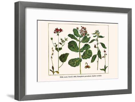 Milk Weed, Stork's Bill, Hamphire-Purselane, Spider Orchids-Albertus Seba-Framed Art Print