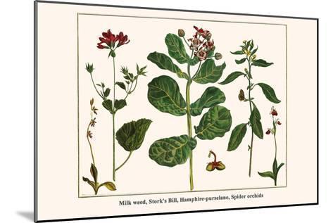 Milk Weed, Stork's Bill, Hamphire-Purselane, Spider Orchids-Albertus Seba-Mounted Art Print
