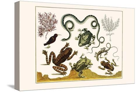 Frogs, Lizards, Snakes, Birds and Plants-Albertus Seba-Stretched Canvas Print