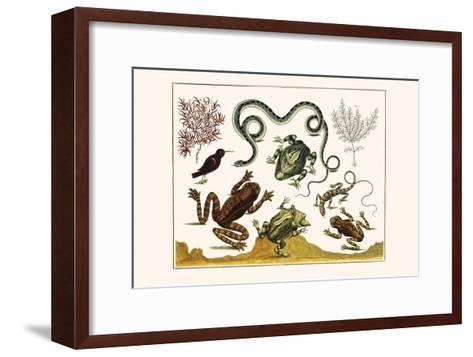 Frogs, Lizards, Snakes, Birds and Plants-Albertus Seba-Framed Art Print
