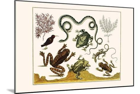 Frogs, Lizards, Snakes, Birds and Plants-Albertus Seba-Mounted Art Print