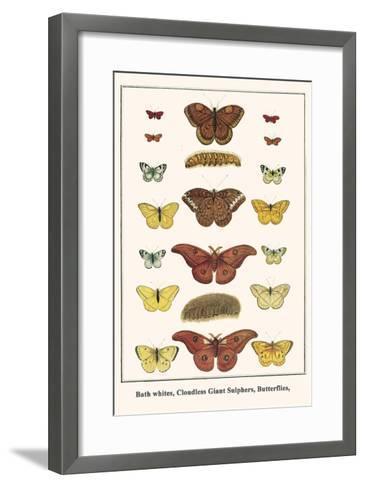 Bath Whites, Cloudless Giant Sulphers, Butterflies,-Albertus Seba-Framed Art Print
