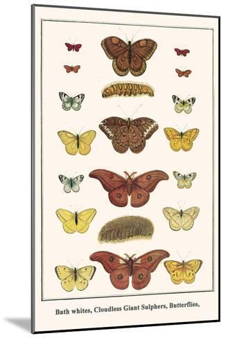 Bath Whites, Cloudless Giant Sulphers, Butterflies,-Albertus Seba-Mounted Art Print