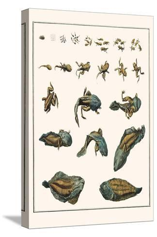 Metamorphosis of Frogs into Toads-Albertus Seba-Stretched Canvas Print