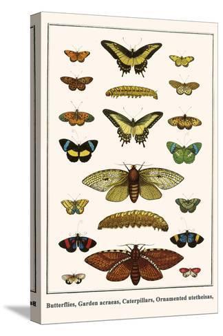 Butterflies, Garden Acraeas, Caterpillars, Ornamented Utetheisas,-Albertus Seba-Stretched Canvas Print