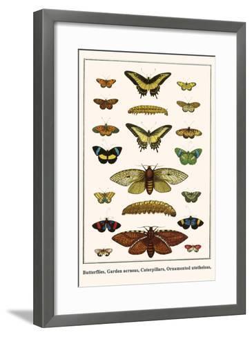Butterflies, Garden Acraeas, Caterpillars, Ornamented Utetheisas,-Albertus Seba-Framed Art Print