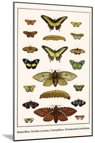 Butterflies, Garden Acraeas, Caterpillars, Ornamented Utetheisas,-Albertus Seba-Mounted Art Print
