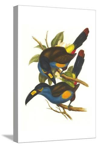 Plate Billed Mountain Toucan-John Gould-Stretched Canvas Print